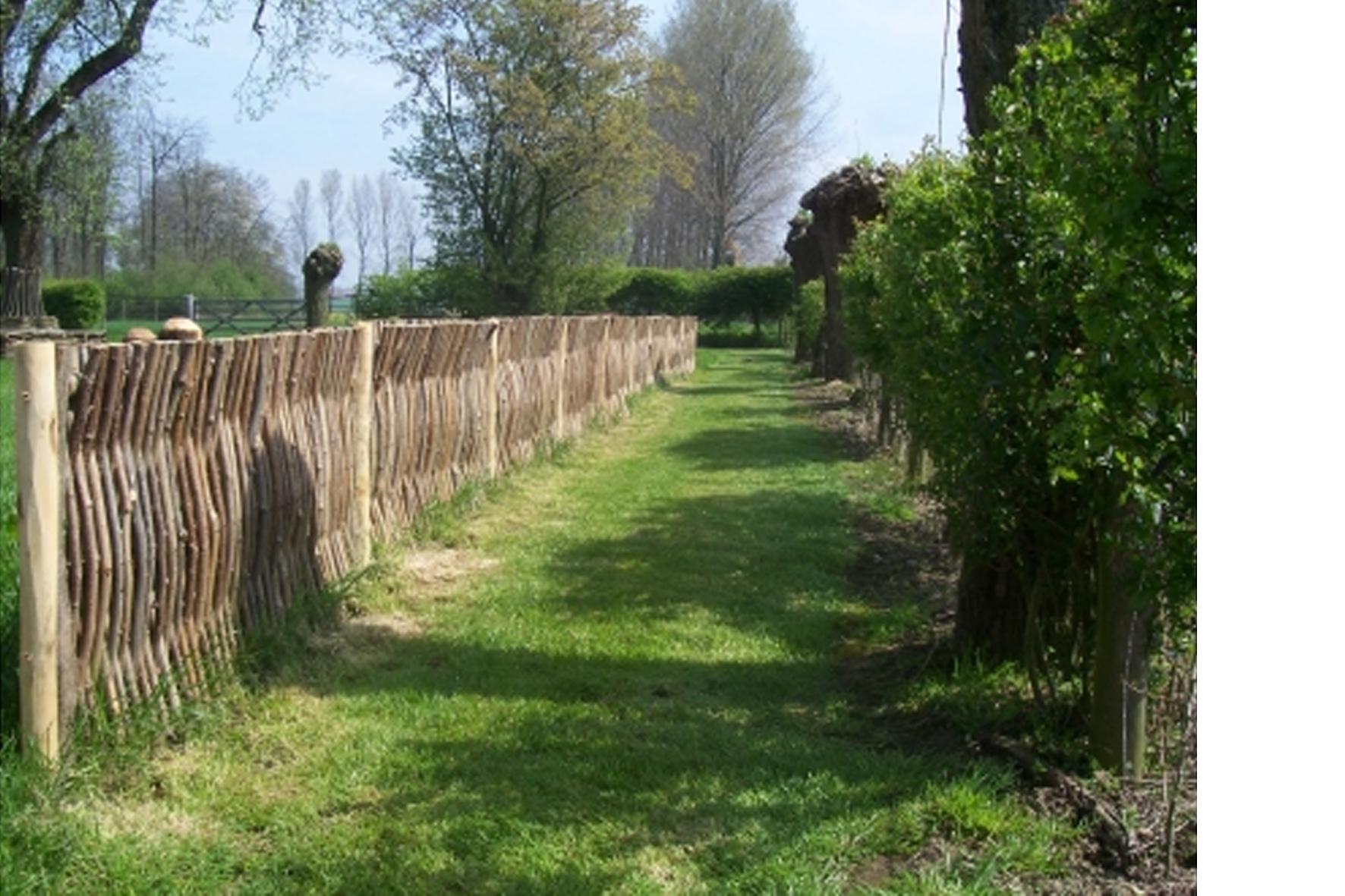 Clôture - Noisetier du rayon clôture - Achetez en ligne!