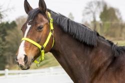 Arrondi cheval tête avec crinière acrylique miroir
